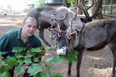 Moulting moments for reindeer