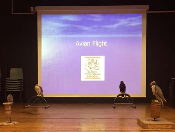avianflight