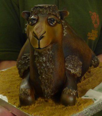 camel-cake
