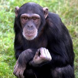 webdzg_carls_chimp_beans_3_0