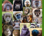 Happy International Primate Day!