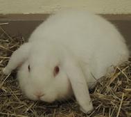 web_farm_bunnies