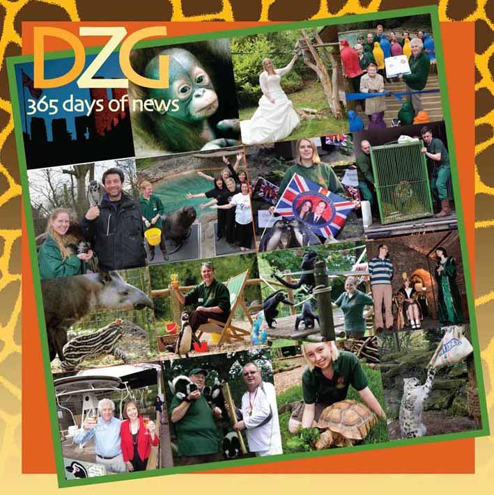 dzg_365_days-2a_0