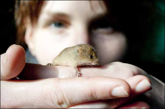 dzg_baby_harvest_mouse1_web_0