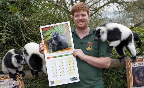 dzg_calendar_lemurs_1