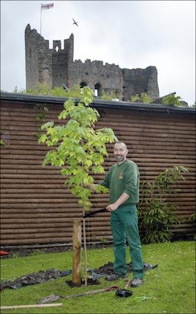 dzg_carl_plants_trees_4_copy_0_0