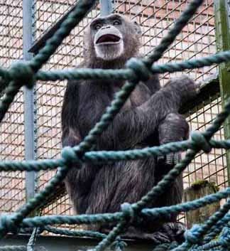dzg_chimp_netting_rob3_web_0