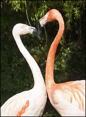 dzg_flamingo_heart_1_web