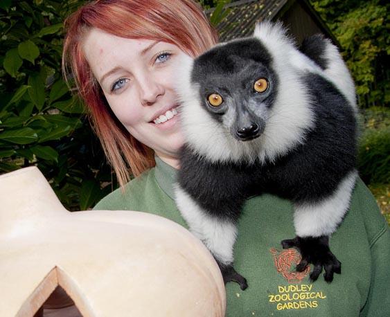 dzg_halloween_lemur2
