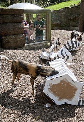 webhuntingdogs