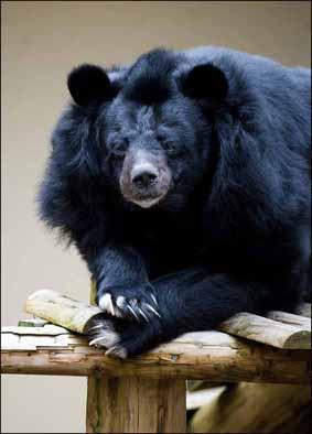 ny_res_bear_1