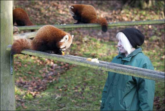 dzg_squirrel