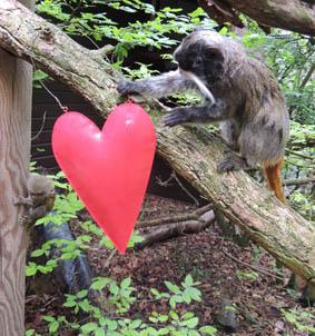 dzg_love_your_zoo_tree