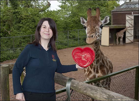 dzg_love_zoo_giraffe_3_web