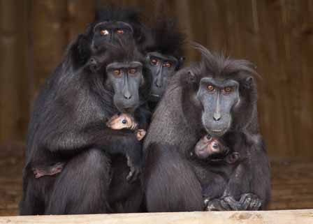 dzg_macaques_quizz