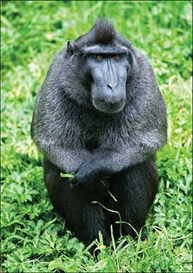 web_dzg_macaques_tent_4