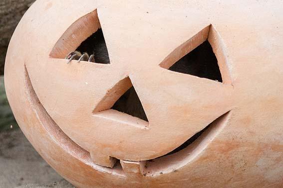 dzg_halloween_meerkat_6_web