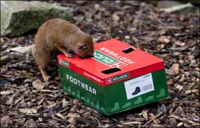 dzg_mongoose_enrichment1_web