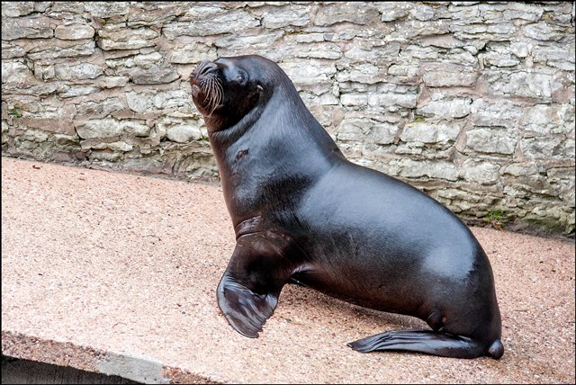 dzg_new_sealion_oba_15_web