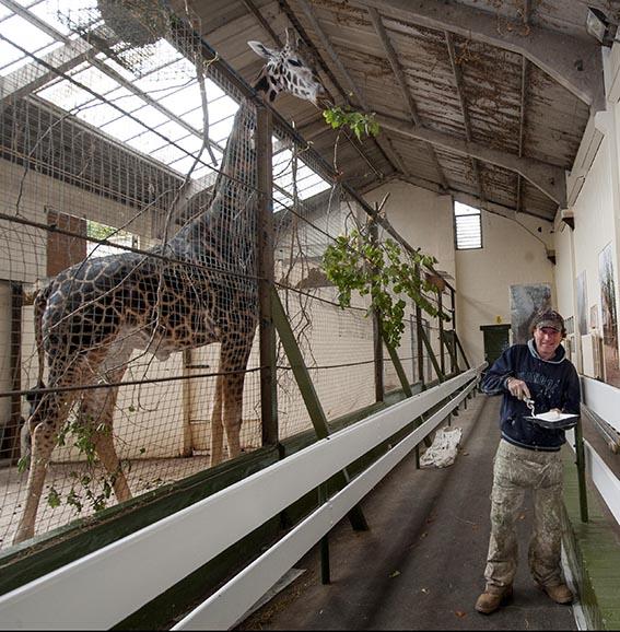 dzg_paint_giraffe