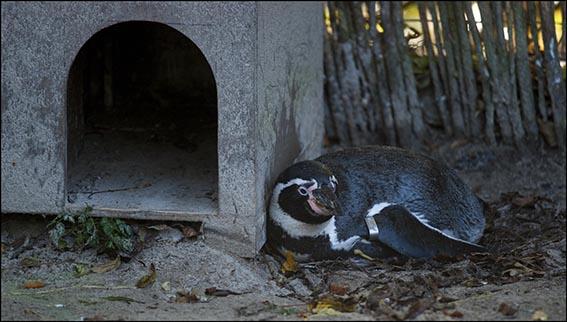 dzg_penguin_rock_1