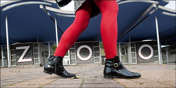 dzg_red_legs_1web