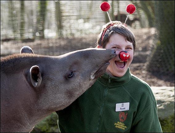 dzg_red_nose_tapir_4_web