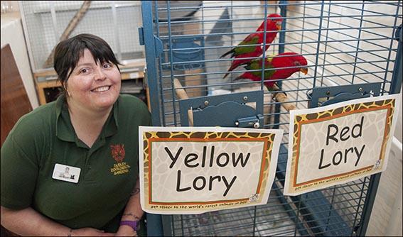 dzg_red_yellow_lory_2_web