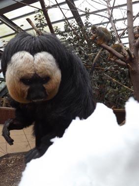 dzg_saki_snow_1