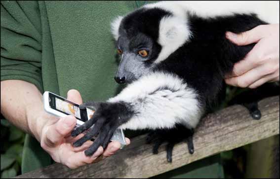 dzg_shaun_lemur_2