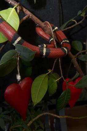 dzg_snake_web_0