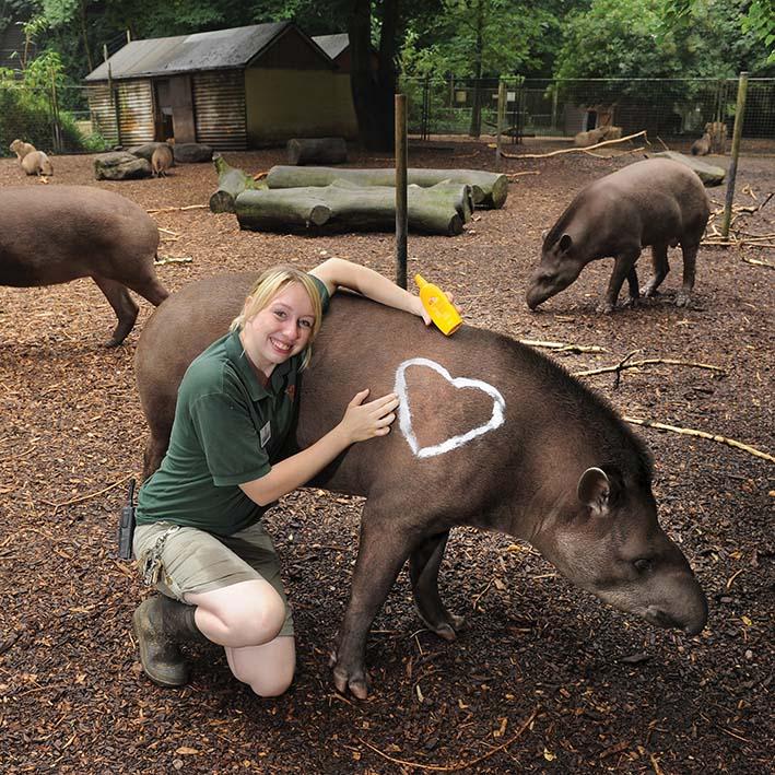 dzg_tapir_sunny_web