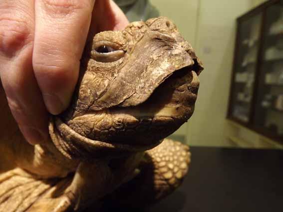 dzg_tortoise_beak_1_web_