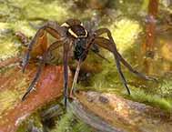 dzg_spider_monkey_census_web_0