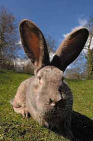 Honey bunny says thanks