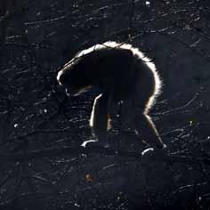gibbonspringlight2-web