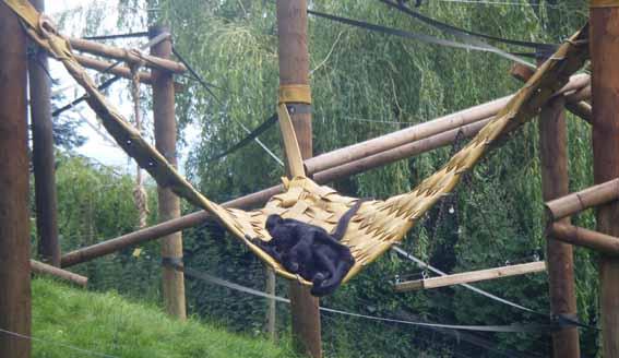 hammock_web