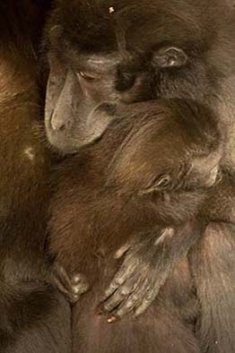 dzg_macaques_2_web