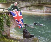 Fishy Jubilee treats