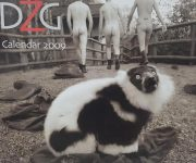 A decade celebrating lemurs