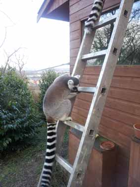 lemur_roof_3_web