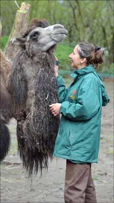 lesley_camel2_web