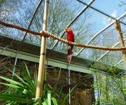 Macaws move in