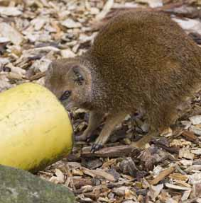 mongoose_3web