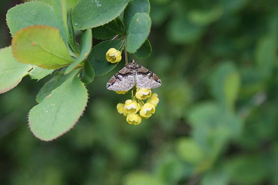 moth_on_plant_web