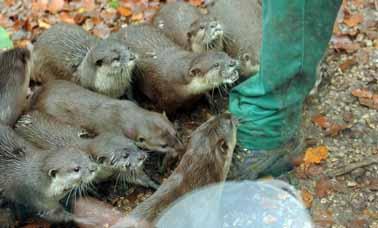otters-2-web