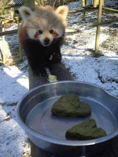 panda-heart-2-web
