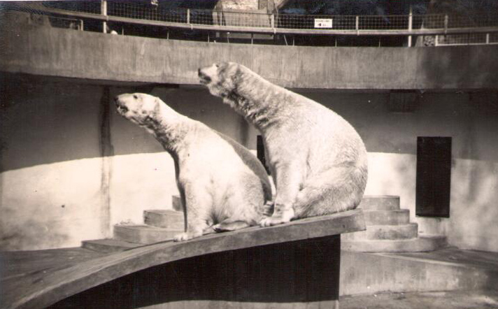 Throwback Thursday Dudley Zoo And Castle