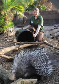porcupine-bin-1-web