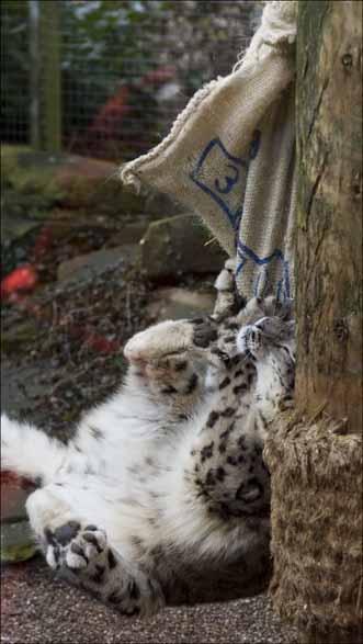 snowleopard-sack1_web